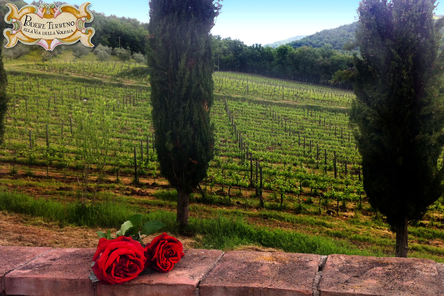 Chianti  farmhouse accommodation
